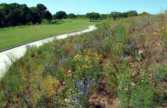 Wildflowers fill the rough on the new Creeks course at Hyatt Hill Country Resort on April 26, 2005. Photo: TOM REEL, Express-News File Photo / SAN ANTONIO EXPRESS-NEWS