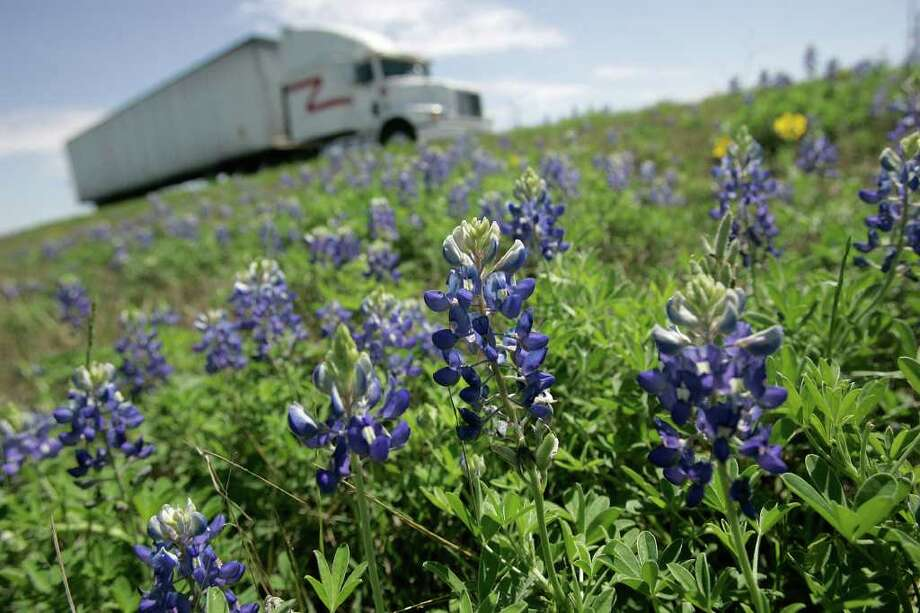Bluebonnets bloom along Interstate 10 east of San Antonio on March 20, 2006. Photo: MIKE KANE, Express-News File Photo /  © San Antonio Express-News