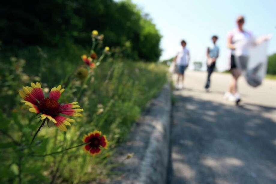 Wildflowers bloom along Raba Drive near Raba Elementary School as Green Team Challenge participants help remove trash May, 14, 2007, at the school. Photo: EDWARD A. ORNELAS, Express-News File Photo / SAN ANTONIO EXPRESS-NEWS