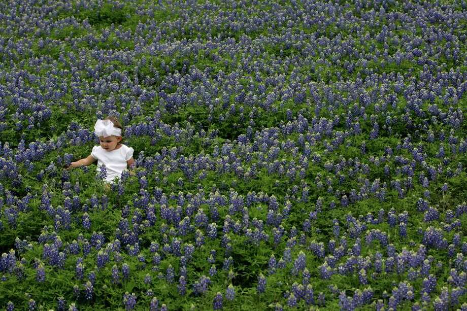 Yza Gonzalez, 1, entertains herself amid the bluebonnets while her parents, J.M. and Leti Gonzalez, photograph her at the Green Mountain Road exit off Loop 1604 in San Antonio on March 25, 2007. Photo: LISA KRANTZ, Express-News File Photo / SAN ANTONIO EXPRESS-NEWS
