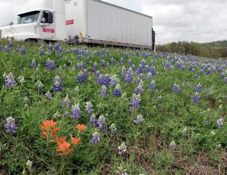 A lone Indian paintbrush punctuates bluebonnets on the median of U.S. 281 near Bulverde on March 24, 2007. Photo: J. MICHAEL SHORT, Express-News File Photo / THE SAN ANTONIO EXPRESS-NEWS