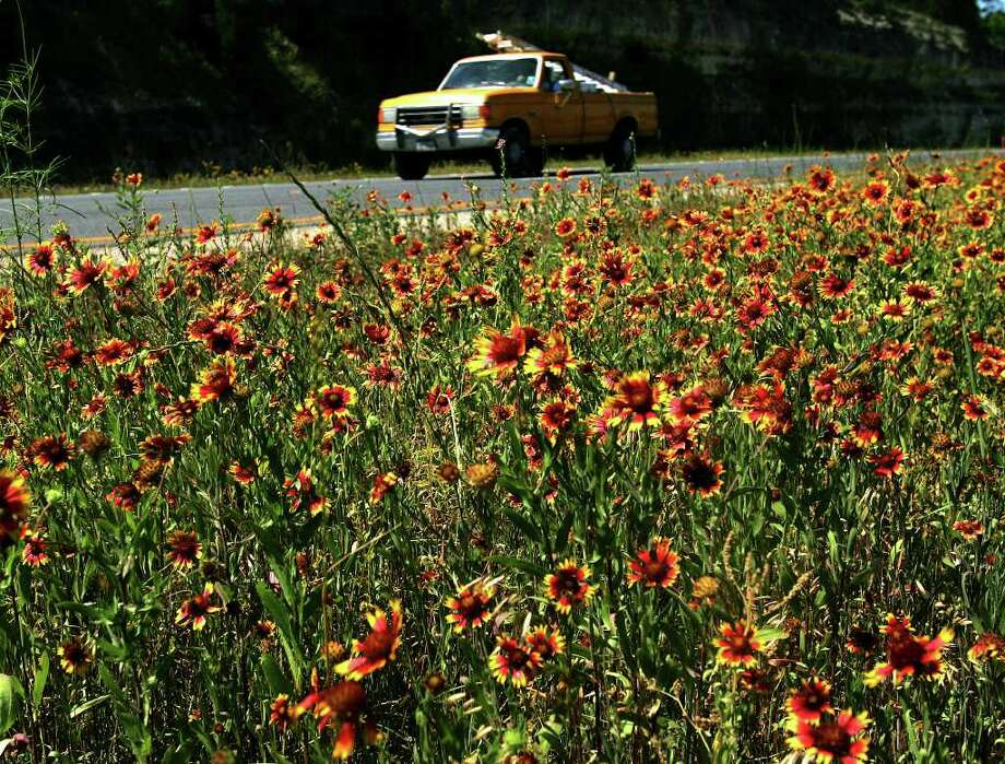 A vehicle passes wildflowers along U.S. 281 in North Bexar County on April 26, 2005. Photo: WILLIAM LUTHER, Express-News File Photo / SAN ANTONIO EXPRESS-NEWS