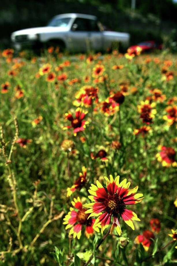 Cars pass wildflowers along U.S. 281 in North Bexar County on April 26, 2005. Photo: WILLIAM LUTHER, Express-News File Photo / SAN ANTONIO EXPRESS-NEWS