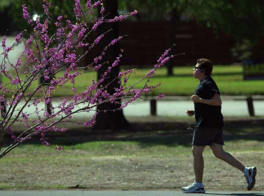 Texas redbuds are at their best in February, when blooms brighten the winter landscape. Photo: Express-News File Photo / jdavenport@express-news.net