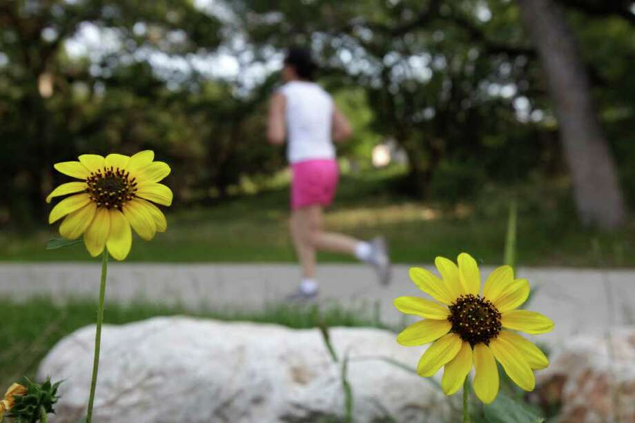 Joggers are treated to various blooming wildflowers along the Salado Creek in Voelcker Park on May 31, 2009. Photo: JERRY LARA, Express-News File Photo / glara@express-news.net