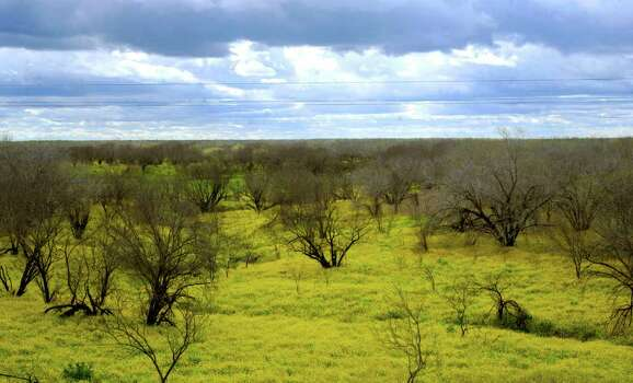 A sea of yellow wildflowers fills the landscape along Texas 16 near Tilden on March 16, 2010. Photo: BILLY CALZADA, Express-News File Photo / gcalzada@express-news.net