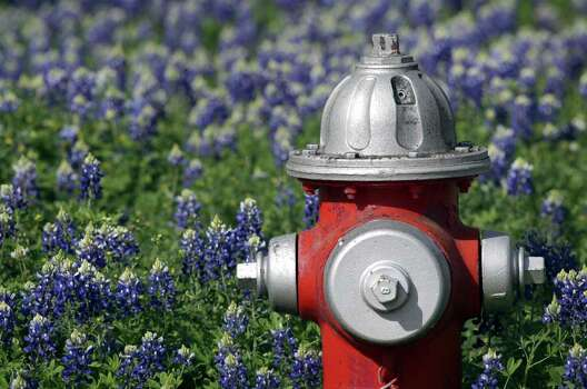 Bluebonnets surround a fire hydrant at the corner of North Elm and West Morse in Fredericksburg on April 2, 2010. Photo: BOB OWEN, Express-News File Photo / rowen@express-news.net