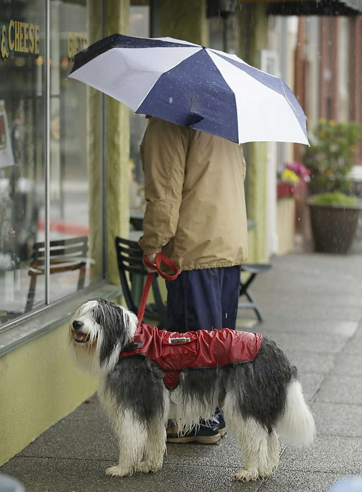 Wally, a Bearded Collie, gets brief cover from the rain as his owner, Bob Stroman, looks into a shop window during a walk in Sausalito, Calif., Wednesday, March 14, 2012. A late winter storm has brought heavy rain and winds to Central and Northern California and more rain is on the way over the next couple of days and the weekend, forecasters say, spelling good news for what has been an unusually dry winter.