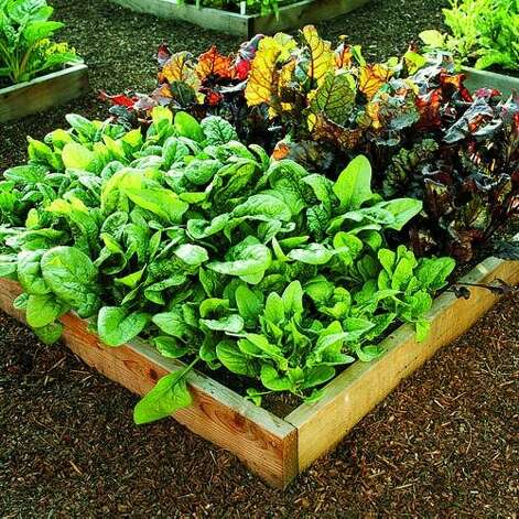 "<b>Grow your own greens:</b> Plant seeds or seedlings of greens in the early part of the season and you'll have the ultimate convenience food throughout the cool season. When it's time to harvest, you'll have garden-fresh arugula, chard, spinach, and more to make healthy meals easily. <b>Read more:</b> <a href=""http://www.sunset.com/travel/spring-trips-00400000065883/?xid=sfg-sunset-030112%3C"">32 great spring trips</a> <br style=""clear:both;"" /><a href=""http://www.sunset.com"" target=""_blank"" class=""sunsetlogo""><img src=""http://imgs.sfgate.com/graphics/partners/sunset/sunset_logo.gif"" alt=""Sunset"" border=""0""/></a> Photo: Rob D. Brodman, Sunset.com"
