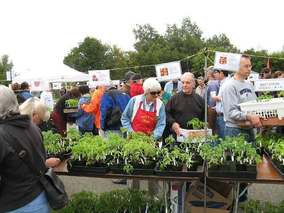 Tomato Plant Sale Announcement. Photo of the Santa Clara annual Spring Garden Market. Photo: UCCE Master Gardeners, Santa Clara County