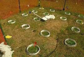 Field Enclosures.JPG