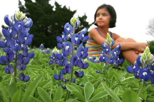 Carmen Elena Sanchez, 9, (cq) rests in a field of Bluebonnets at McKinney Falls State Park in Austin on Friday March 23, 2007.  (Sharon Steinmann / Chronicle) Photo: Sharon Steinmann, Ho / Houston Chronicle