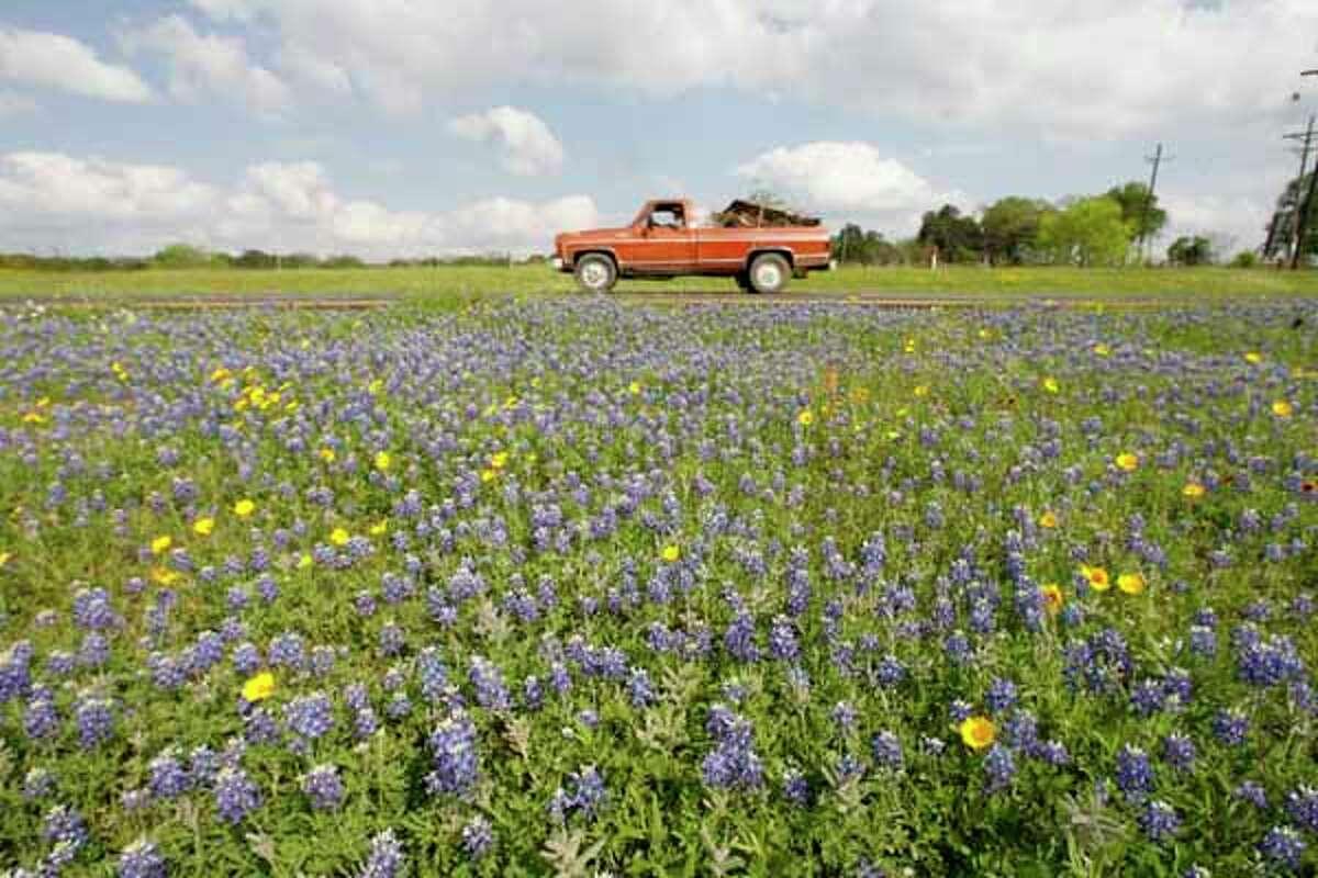 A red truck passes by Bluebonnets in a median on Highway 6 between Navasota and Hempstead Thursday, 2006.