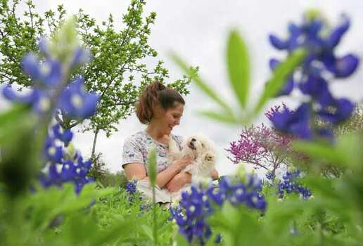 "Janis Harding of Angleton holds her dog ""Bitsy"" (cq names) in a field of Blue Bonnets at McKinney Falls State Park in Austin on Friday March 23, 2007.  (Sharon Steinmann / Chronicle) Photo: Sharon Steinmann, Ho / Houston Chronicle"