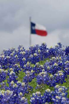 Bluebonnets and Texas flag in Independence, Texas, near a historical marker on the side of the road. by Debra G. Lewis. READER SUPPLIED PHOTO. Photo: Debra G. Lewis, Ho / handout
