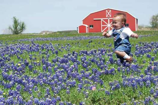 Nathan in the Bluebonnets by dav345 Photo: Ho / handout