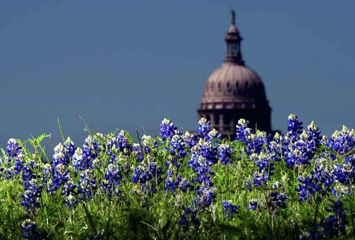 The Capitol dome looms over a patch of bluebonnets Wednesday March 30, 2005, in Austin, Texas. The Texas Legislature adopted the bluebonnet as the official state flower in 1901. (AP Photo/The Austin American-Statesman, Jay Janner) HOUCHRON CAPTION (05/01/2005-2-STAR) SECNEWS COLORFRONT: STATE FLOWER: Bluebonnet HOUCHRON CAPTION (05/01/2005) SECMETRO COLORFRONT: FLOWER: Bluebonnet