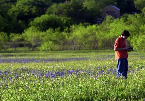 Joseph Bracken wades through a field of wildflowers to complete his Temple High School biology project Wednesday, April 14, 2004, in Temple, Texas. The project involves identifying various wildflowers.  (AP Photo/The Daily Telegram, Dana Centola).     HOUCHRON CAPTION (04/18/2004 - 3-star): Joseph Bracken logs wildflowers he has identified as part of a project for his biology class at Temple High School last week in Temple. Photo: DANA CENTOLA, Ho / TEMPLE DAILY TELEGRAM