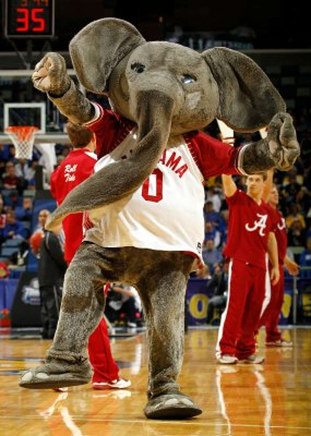 Big Al, the mascot for the Alabama Crimson Tide, seems to be having some sort of trunk malfunction. (Chris Graythen / Getty Images)
