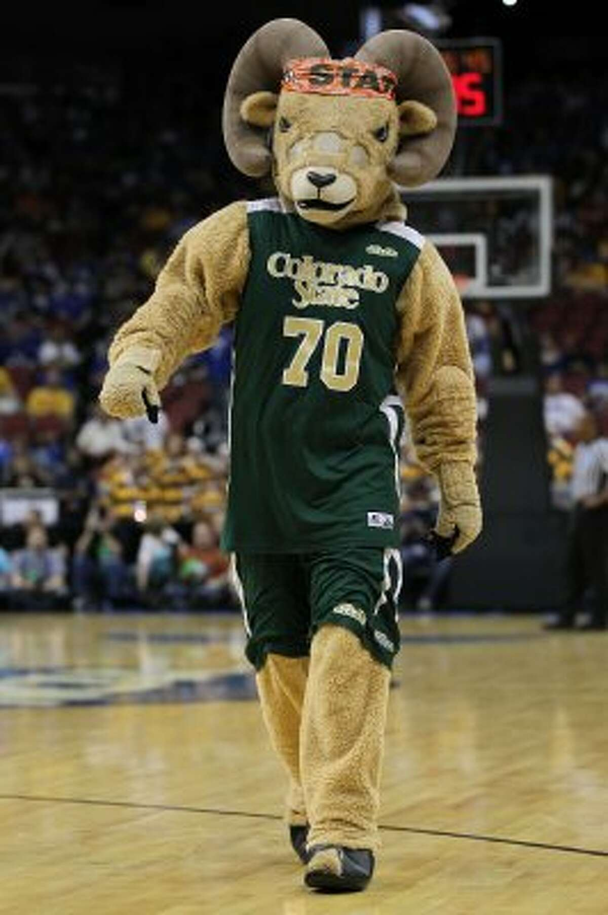 CAM the Ram of Colorado State has just enough mean in his eyes to work. (Jonathan Daniel / Getty Images)