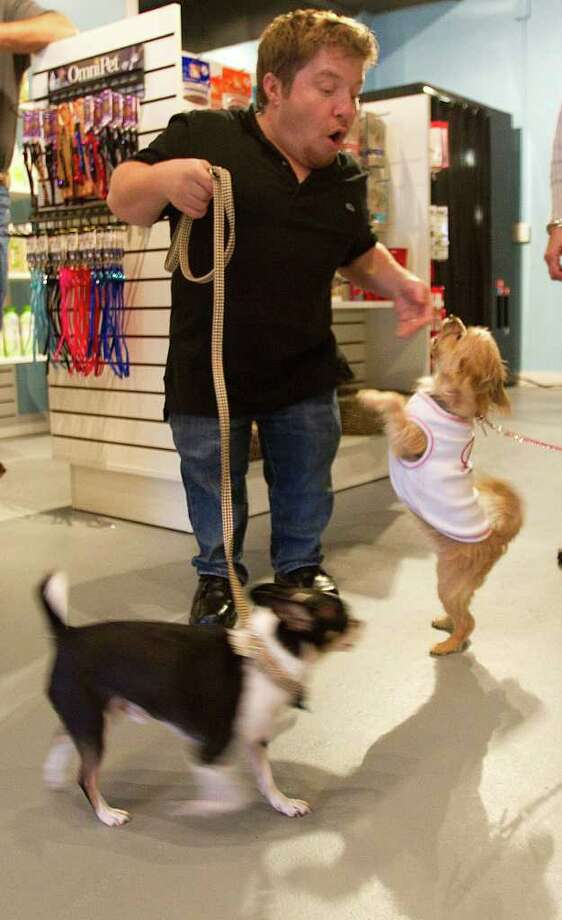 """Bill Klein, who, along with his wife, Jen, star in TLC's """"The Little Couple,"""" walks through the couples new pet store with their dogs, Rocky and Maggie. Photo: Brett Coomer / © 2012 Houston Chronicle"""