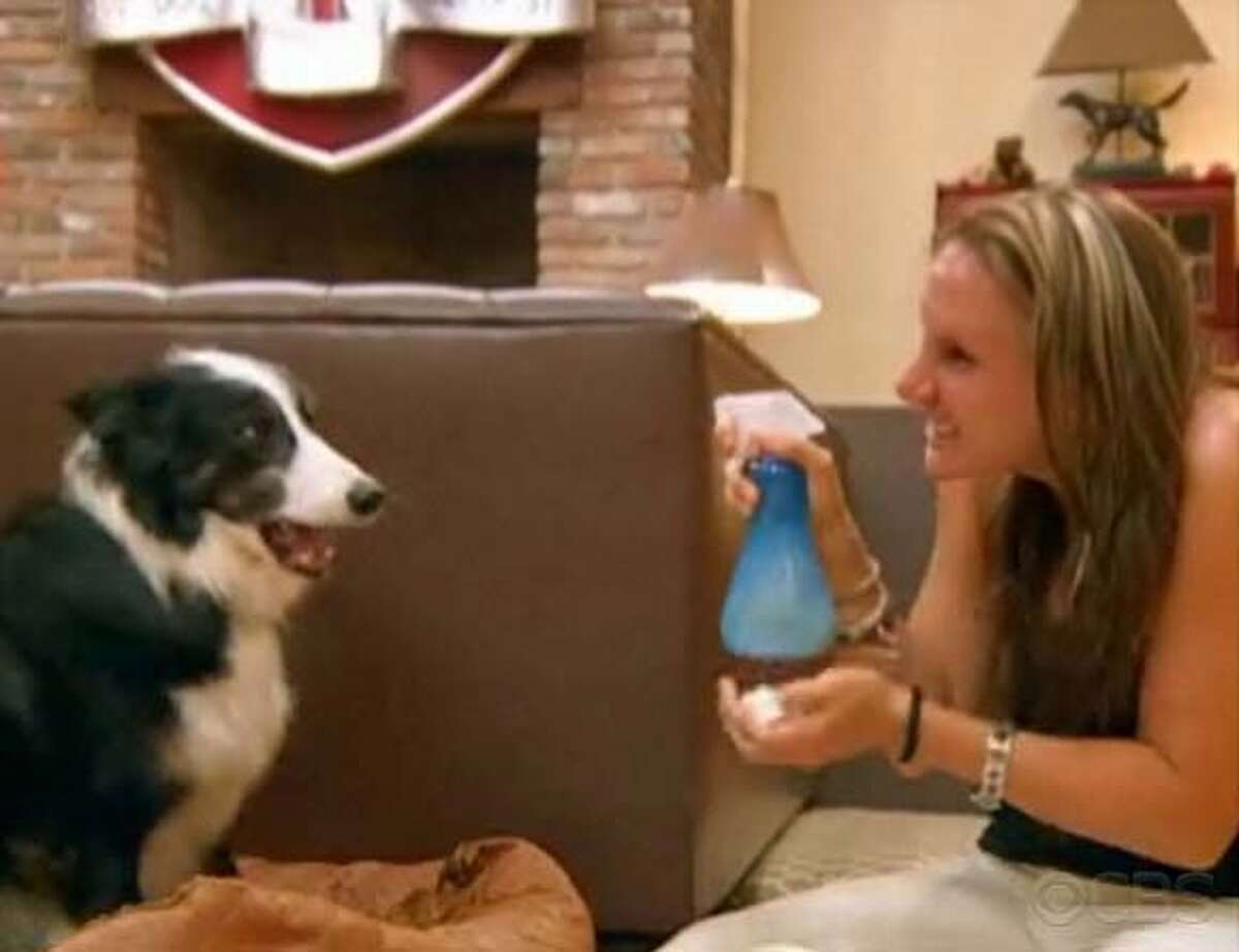 """On the """"Greatest American Dog"""" episode """"America's Top Dog Model,"""" contestant Teresa uses a spray bottle containing diluted grapefruit juice on her dog Leroy. Video grab by CBS"""