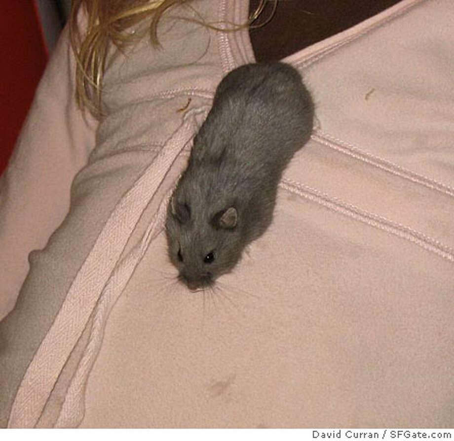 Hamster (David Curran / SFGate.com)