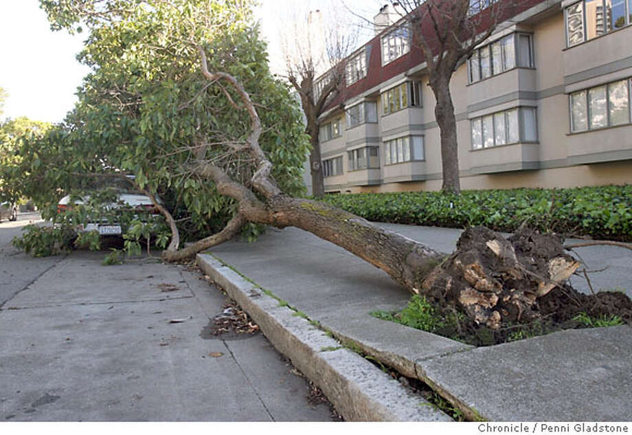 On Ellis near Laguna, a huge tree, taken from it's roots, fell on this car. It fell probably due to the storm of wind and rain we had last night and this morning. Stil, by early afternoon it had not been taken away. The City presumably can't get to all the accidents.  Event on 12/27/06 in San Francisco.  Penni Gladstone / The Chronicle Photo: Penni Gladstone