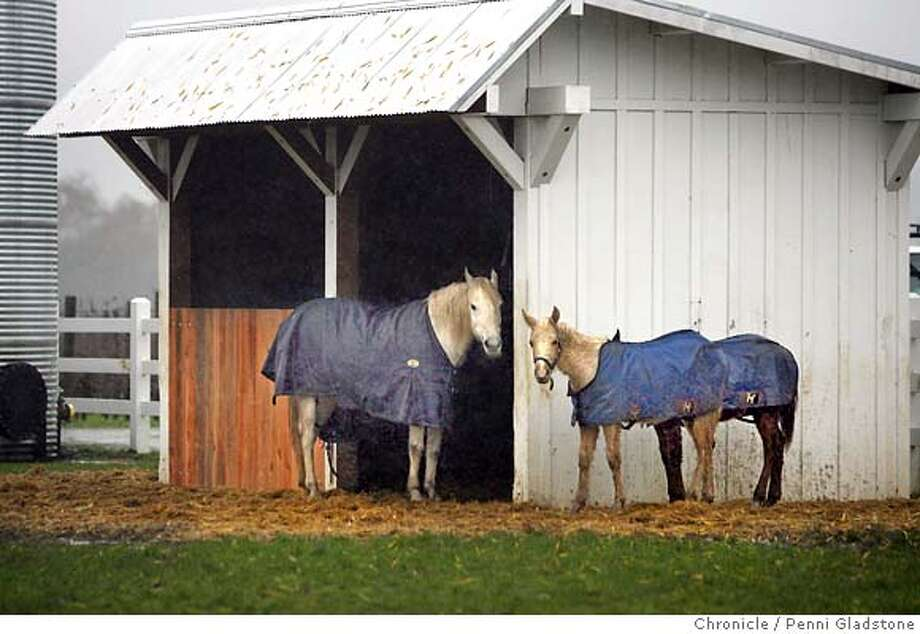 The rainy afternoon weather kept these horses close to their barn. There were all wearing coats like most of their two legged friends. They were found huddling at the Nickel and Nickel Single Vineyard Wines property in Oakville.  Event on 12/26/06 in Oakville.  Penni Gladstone / The Chronicle Photo: Penni Gladstone