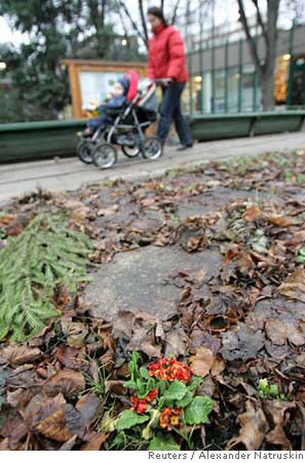 A woman walks past a primrose flower in the Botanical Garden of Moscow's State University December 14, 2006. Russia's capital, renowned for its freezing winter, has started the Christmas season with unusually warm weather as temperatures hover during the day above freezing. REUTERS/Alexander Natruskin (RUSSIA) 0 Photo: ALEXANDER NATRUSKIN
