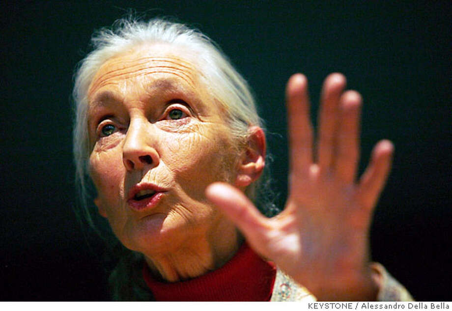 "British primatologist, ethologist and anthropologist Jane Goodall talks to students at the University of Zurich, Switzerland, Monday, Dec. 4, 2006. Jane Goodall spoke about ""Reasons for Hope"". (AP Photo/KEYSTONE/Alessandro Della Bella) Photo: ALESSANDRO DELLA BELLA"