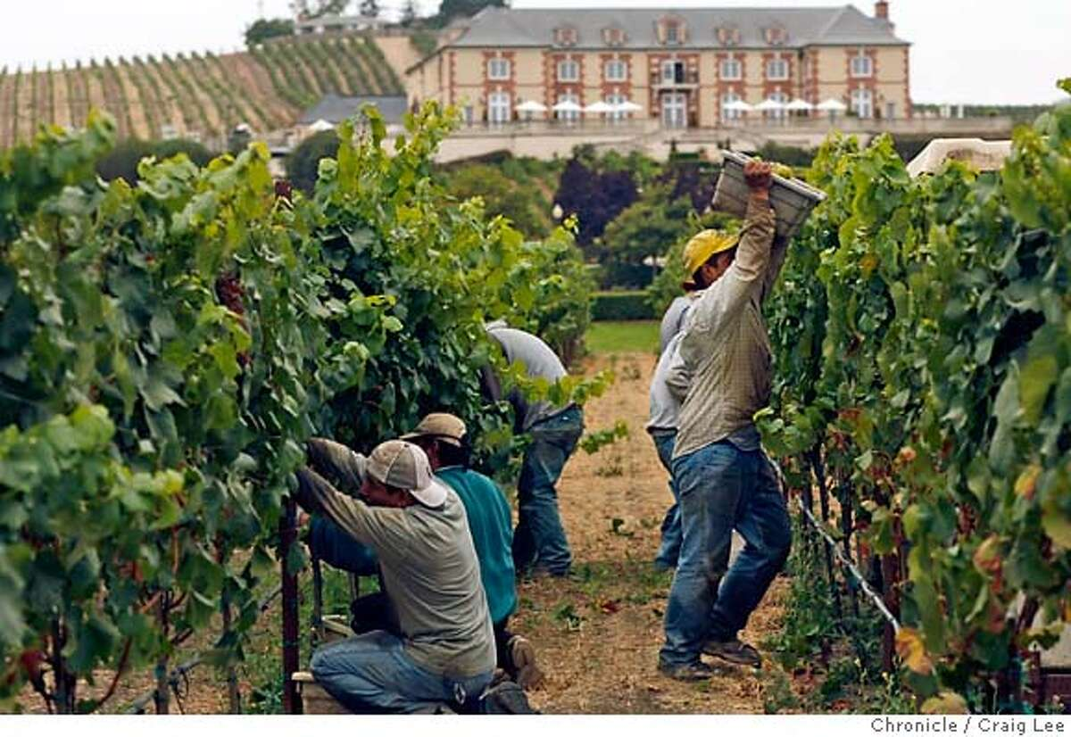 HARVEST15_660_cl.JPG Grape harvest at Domiane Carneros. They are harvesting Chardonnay for their sparkling wines. The Domaine Carneros winery in in the background. Craig Lee / The Chronicle MANDATORY CREDIT FOR PHOTOG AND SF CHRONICLE/ -MAGS OUT