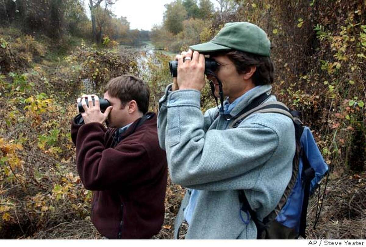 Tom Gardali of Point Reyes Bird Observatory, left, and Greg Golet of the Nature Conservancy search for interesting birds at a wildlife preserve near Hamilton City, Calif., on Monday, Nov. 20, 2006.(Photo/Steve Yeater) Ran on: 11-27-2006 A tagged golden-crowned sparrow waits for release after being caught in a mist net at a wildlife preserve. Ran on: 11-27-2006 A tagged golden-crowned sparrow waits for release after being caught in a mist net at a wildlife preserve.