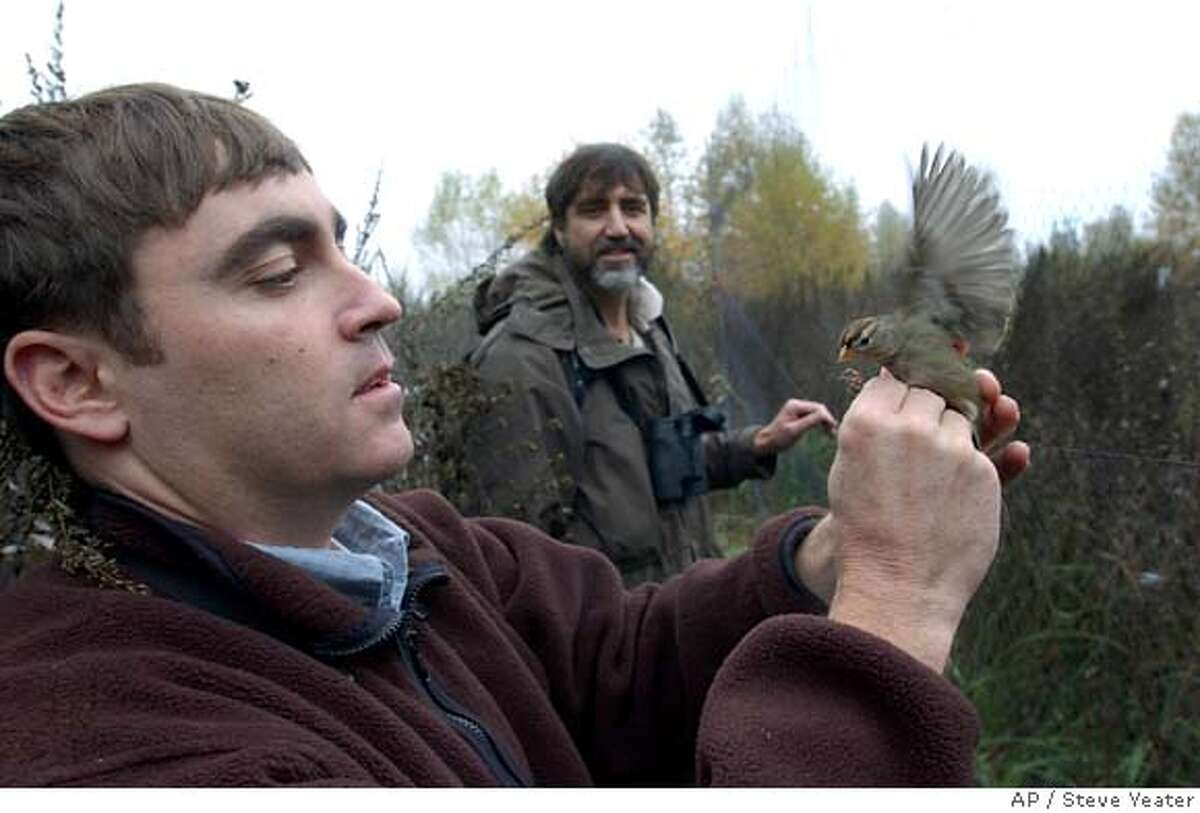 Tom Gardali of the Point Reyes Bird Observatory, left, and Joe Silveira of the Sacramento River Wildlife Refuge admire a bird after removing it from a mist net during a study at a wildlife preserve near Hamilton City, Calif., on Monday, Nov. 20, 2006.(Photo/Steve Yeater) Ran on: 11-27-2006 A tagged golden-crowned sparrow waits for release after being caught in a mist net at a wildlife preserve. Ran on: 11-27-2006 A tagged golden-crowned sparrow waits for release after being caught in a mist net at a wildlife preserve.