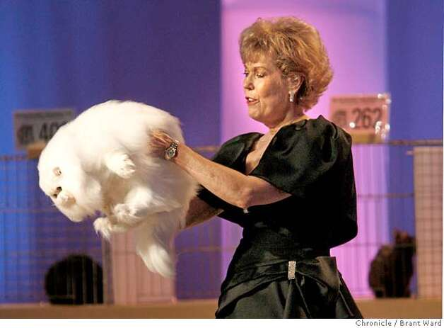 "Judge Kitty Angell carries a Copper-eyed White Persian cat named GRC Melositos White Owl D'Eden Lover to the judging table during a taping of an upcoming television show, which was taped at the cat show.  The 19th annual Cat Fanciers"" Association cat show was held at the San Mateo County Expo over the weekend. More than 750 cats representing 41 breeds attracted cat fanciers from all over the nation. This is the most prestigious competition in the pedigreed cat world.  {Brant Ward/San Francisco Chronicle}11/19/06 Photo: Brant Ward"