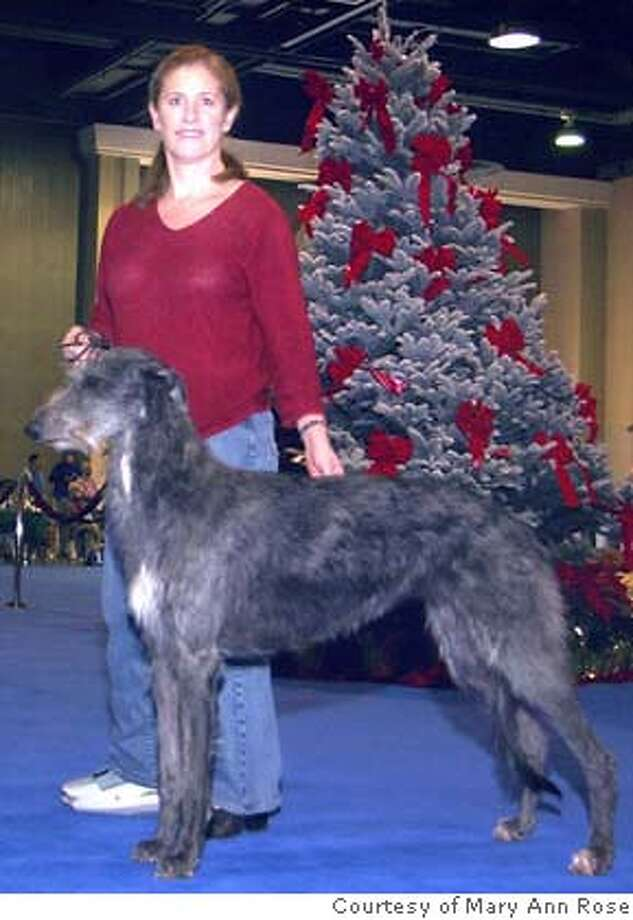Angelina, a Scottish Deerhound, and owner Mary Ann Rose last November, before Angelina was diagnosed with a serious drug-resistant staph infection that almost cost her life. Photo courtesy of Mary Ann Rose
