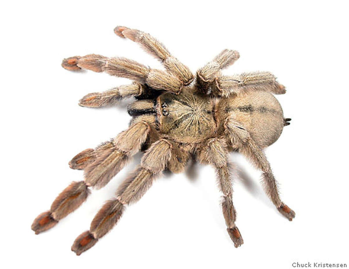 Spider photo for daily and the credit should be the source of the email. Any questions ask Carl Hall. Credit: Chuck Kristensen