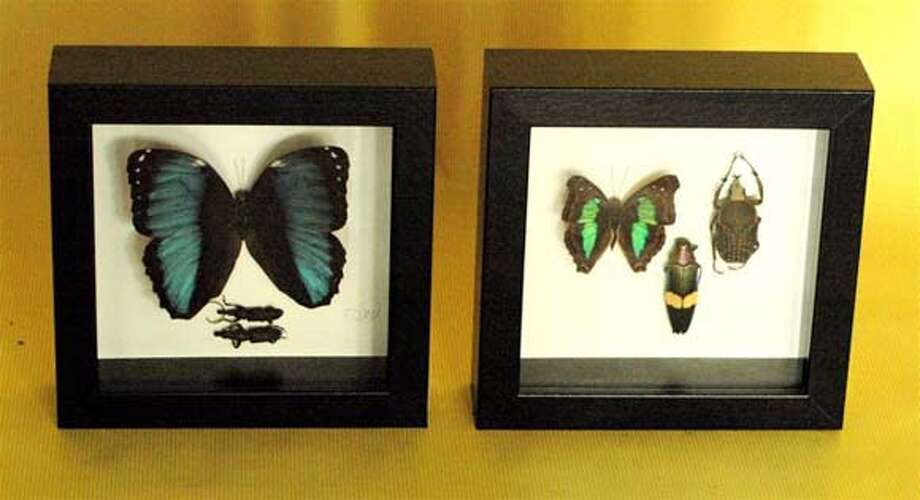 Colorful insects and butterflies mounted in shadow-box frames at L'Atelier d'Flor�al.