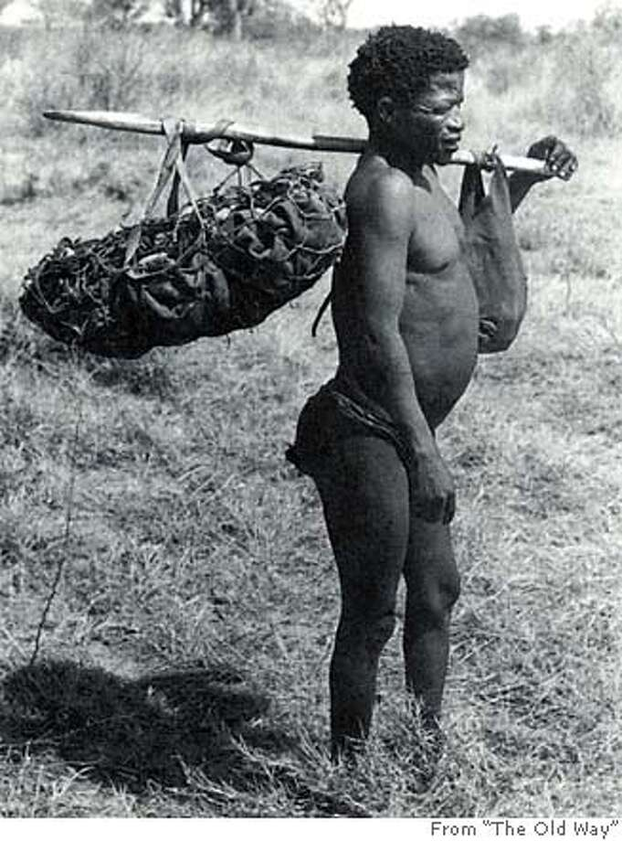 "A Bushman returns from a foraging trip carrying a hide sack laden with with nuts. A party of men and women would travel for days across waterless land to clean nut groves and groundnut patches. Photo from ""The Old Way"""