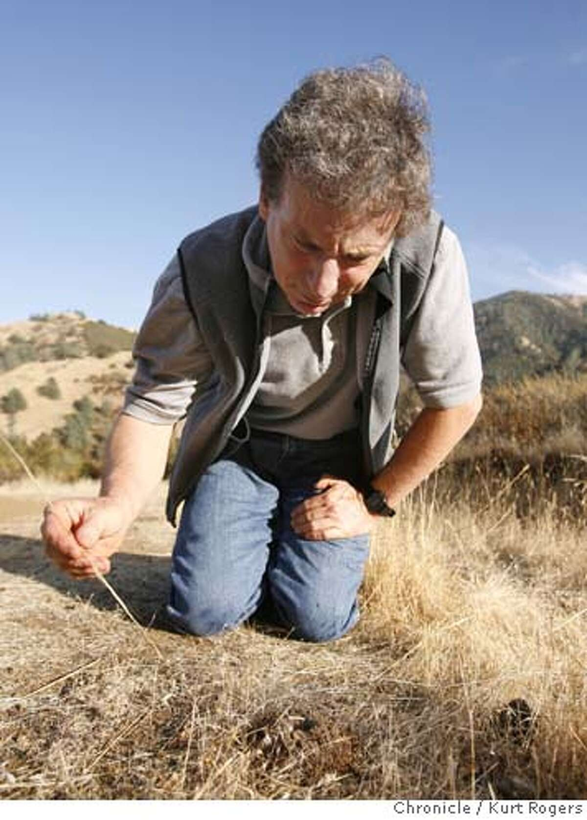 Ken Lavin looks into a tarantula burrow hoping to see a spider in October 2006.