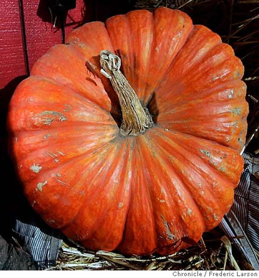 Pumpkin. Chronicle file photo, 2005, by Frederic Larson