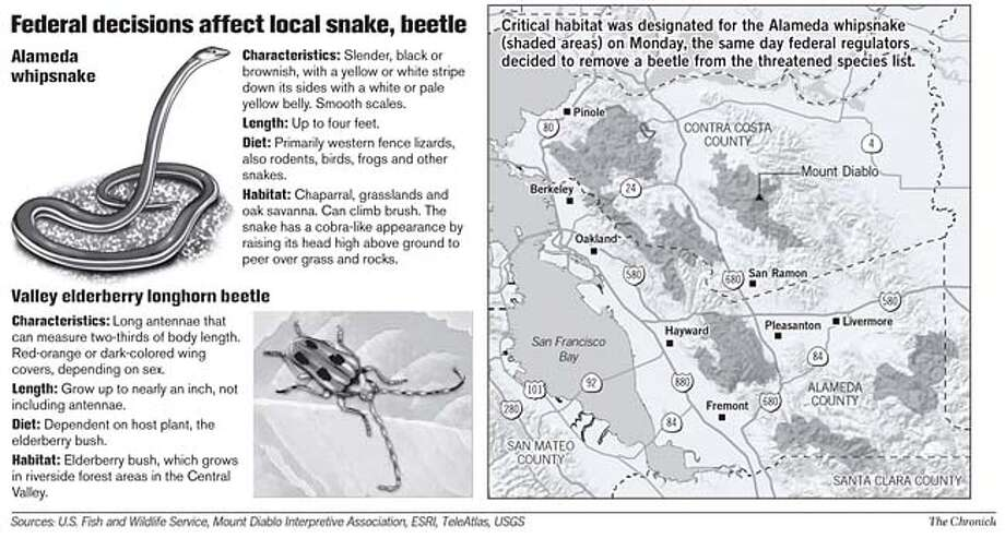 Federal Decisions Affect Local Snake, Beetle. Chronicle Graphic