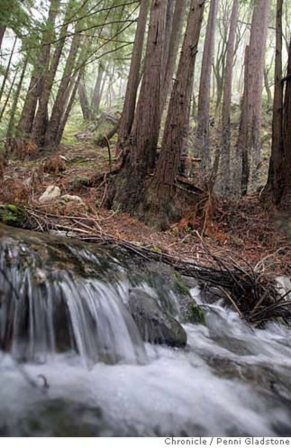 VENTANACAMP08 Water in the creeks flows at Julia Pfeiffer Burns State Park. Event on 9/14/06 in Big Sur.  Penni Gladstone / The Chronicle Photo: Penni Gladstone