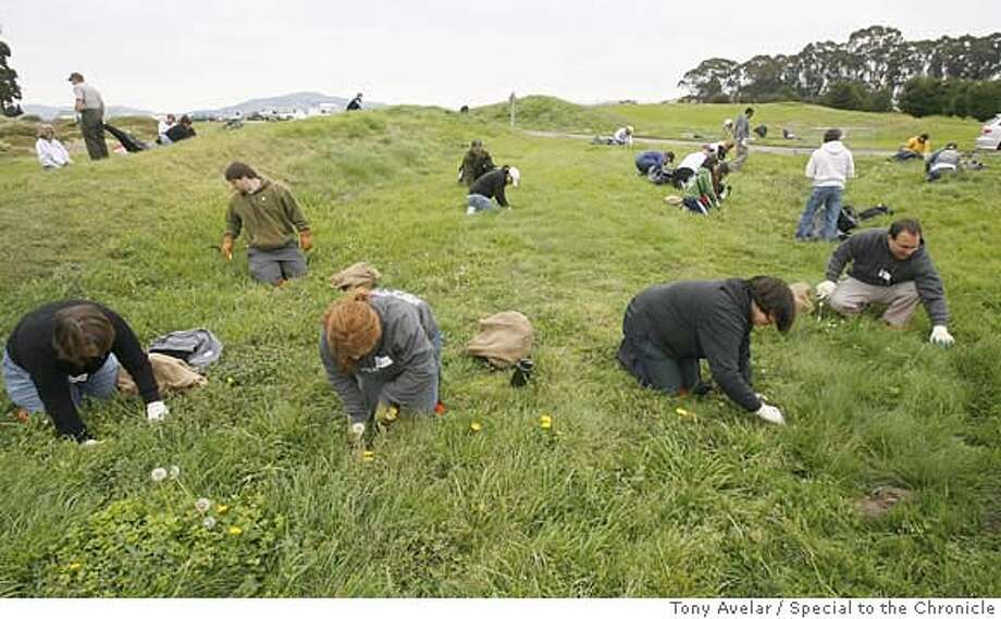 LANDSDAY01- Volunteers gather at Crissy Field to pull weeds, trail maintenance, and re-seeding during National Public Lands Day, a Coastal Cleanup at on Saturday. Thousands of Bay Area residents joined tens of thousands of volunteers nationwide in picking up brooms, shovels and hammers on Saturday to help spit-shine the nation's state and federal parks. By Tony Avelar / SPECIAL TO THE CHRONICLE Photo: TONY AVELAR