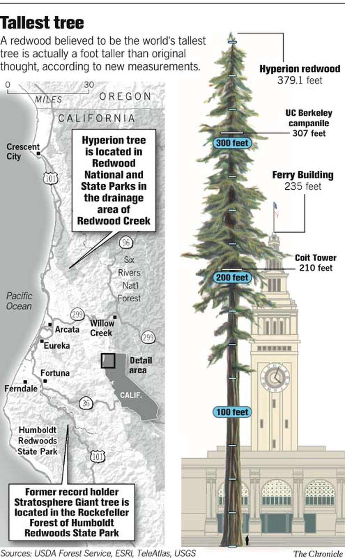 Tallest Tree. Chronicle Graphic