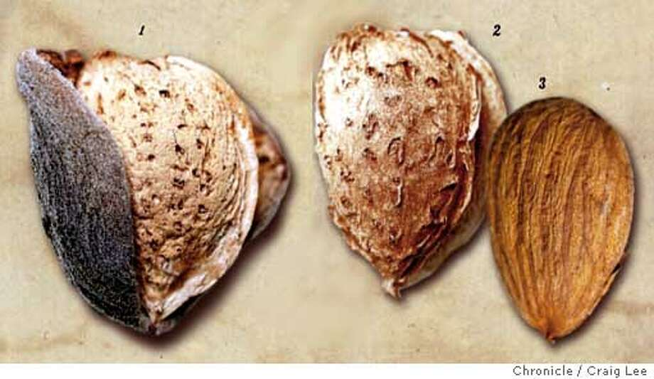 In a nutshell: Three stages of almonds, from tree to table. Chronicle photo illustration by Craig Lee