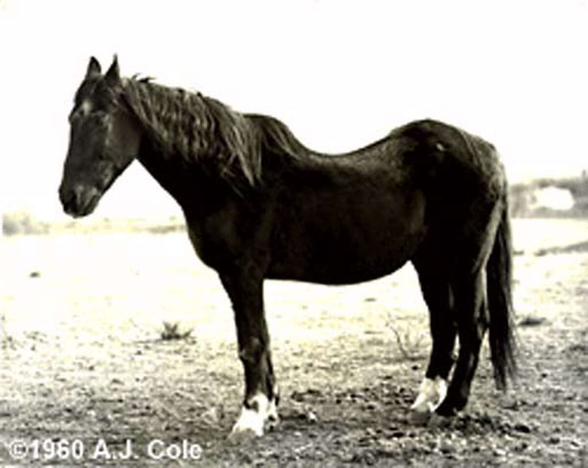 Here's the jpg of the real Blackie. The photo credit is ridiculous: Photo by Anna Jean Cole, courtesy of the Belvedere-Tiburon Landmark Society.