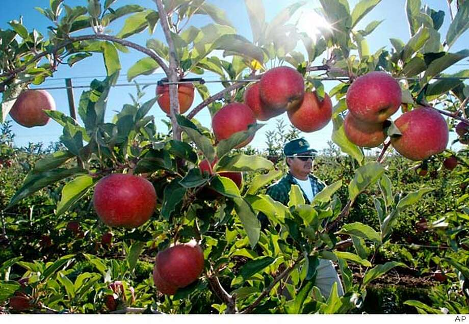 Apples, like Jonathans, are plentiful and good. Associated Press File Photo