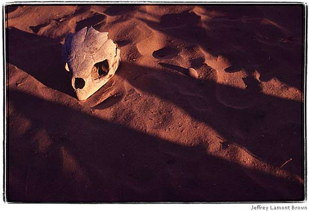 sea turtle skull on a baja califorbnia beach. A sign of sea turtle bycatch and poaching for the lucrative black market. one time use only