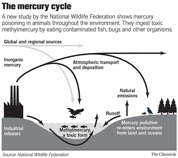 Mercury is an overlooked component of air pollution here for Where does mercury in fish come from
